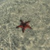 Under water starfish